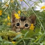 Kitty_cat_in_flowers-Cute_little_kitty_cat_living_wallpaper_medium